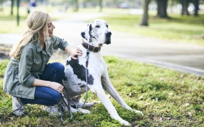 How to Prevent Heartworm Disease in Dogs